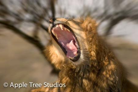 Apple Tree Studios Lions08