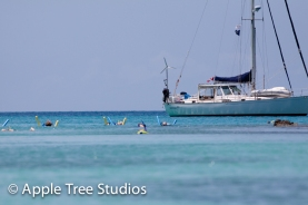 Apple Tree Studios Sail Mag43