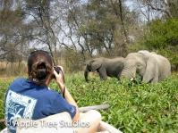 Elephants-1-2