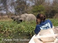 Elephants-1-3