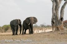 Elephants-1-5