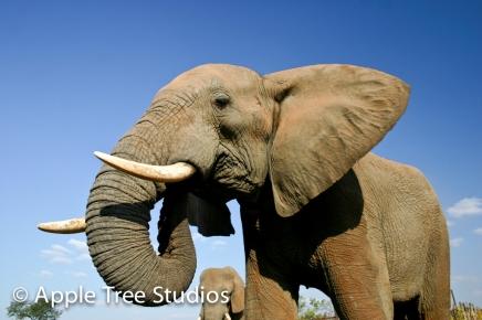 Elephants-1-6